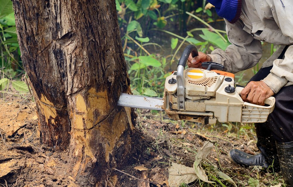 How To Cut Down A Tree Miter Saw Judge